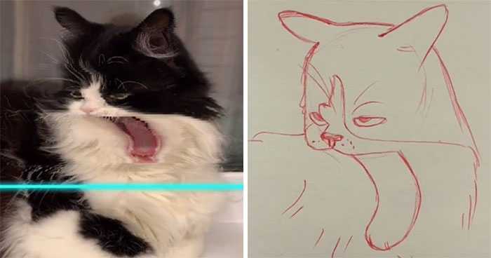 17 Funny Illustrations Of Cats And Dogs After They Were Captured With The Time Warp Scan Filter, Drawn By An Artist On TikTok