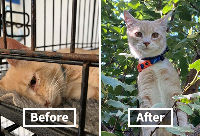 This Online Community Shares Before And After Adoption Pics, Shows How Love And Care Changes Cats (30 New Pics)