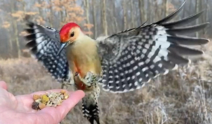 Photographer Records Fun Videos Of Birds Eating From Her Palm In Slow Motion