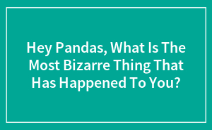 Hey Pandas, What Is The Most Bizarre Thing That Has Happened To You?