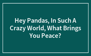 Hey Pandas, In Such A Crazy World, What Brings You Peace?