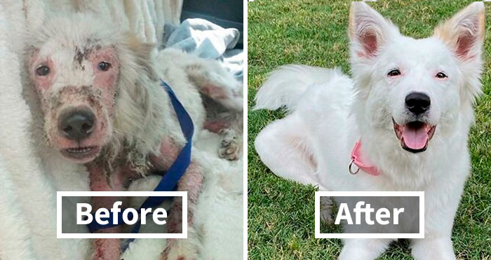 30 Dog Photos Before & After Their Life-Changing Adoption (New Pics)