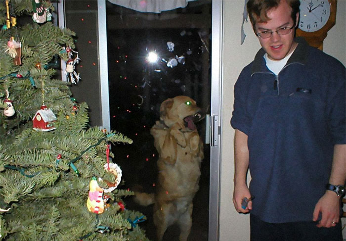 39 Christmas Pics That Were Supposed To Be Nice Until The Dog Showed Up