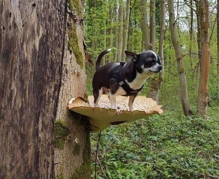Dogs Standing On Mushrooms Is The Internet's New Favorite Thing (26 Pics)