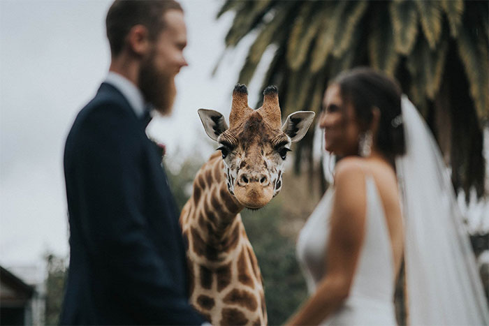 The Best Wedding Photos Of 2020 Have Just Been Announced, And Here Are The 30 Best Ones
