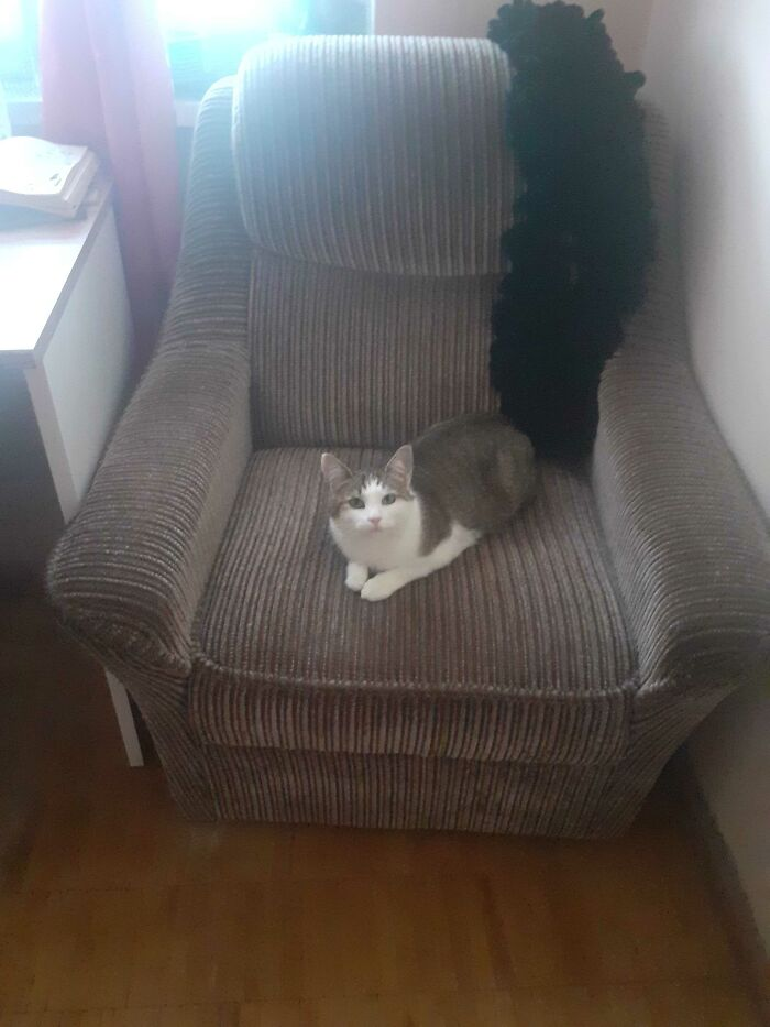 Chillin' On Her Seat