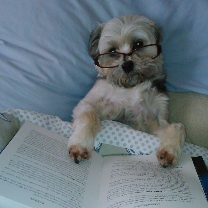 I've Told You Not To Interrupt Me When I Am Reading!