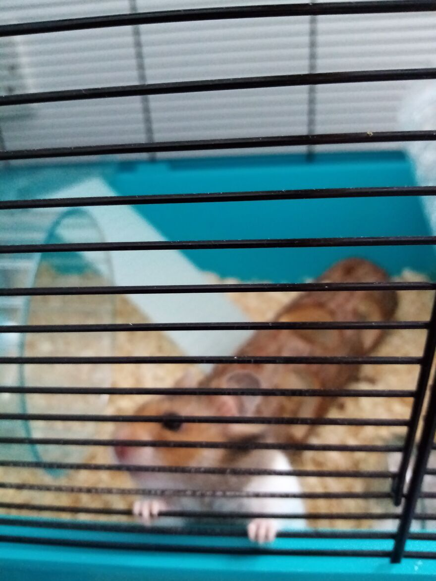 My Boy Henry, Who Passed Away In August Last Year. He Was A Hamster, Does He Count?