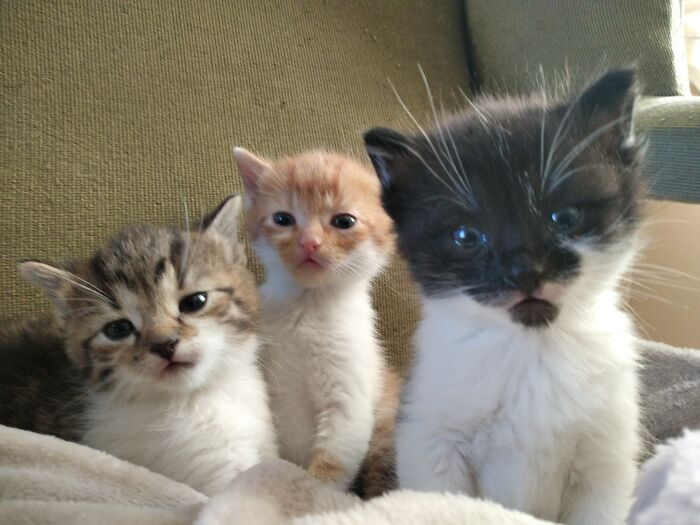 Lewis, Max And Dorothy, Bottle Fed Orphans Who Just Couldn't Return To The Shelter;)