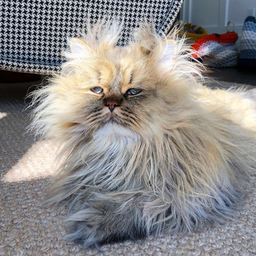 Meet Barnaby, The Cross-Eyed Persian Cat Who Is Cute But Always Seems To Be Sad