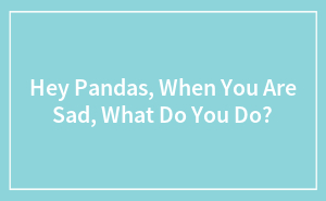 Hey Pandas, When You Are Sad, What Do You Do?