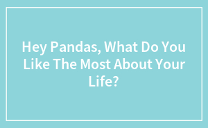 Hey Pandas, What Do You Like The Most About Your Life?