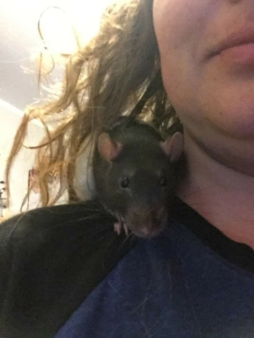 My Precious Zazu. This Is His Favorite Place, And He Will Cuddle Up Behind My Neck For Naps.