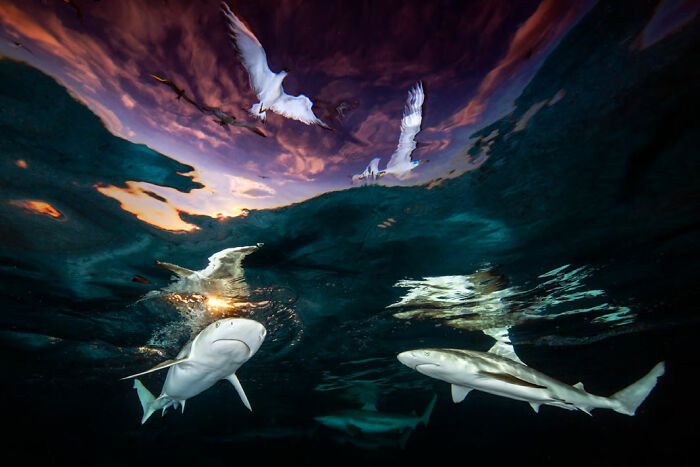 'Sharks' Skylight' By Renee Capozzola (United States), 1st Place In 'Wide Angle' And Overall Winner Of The Contest