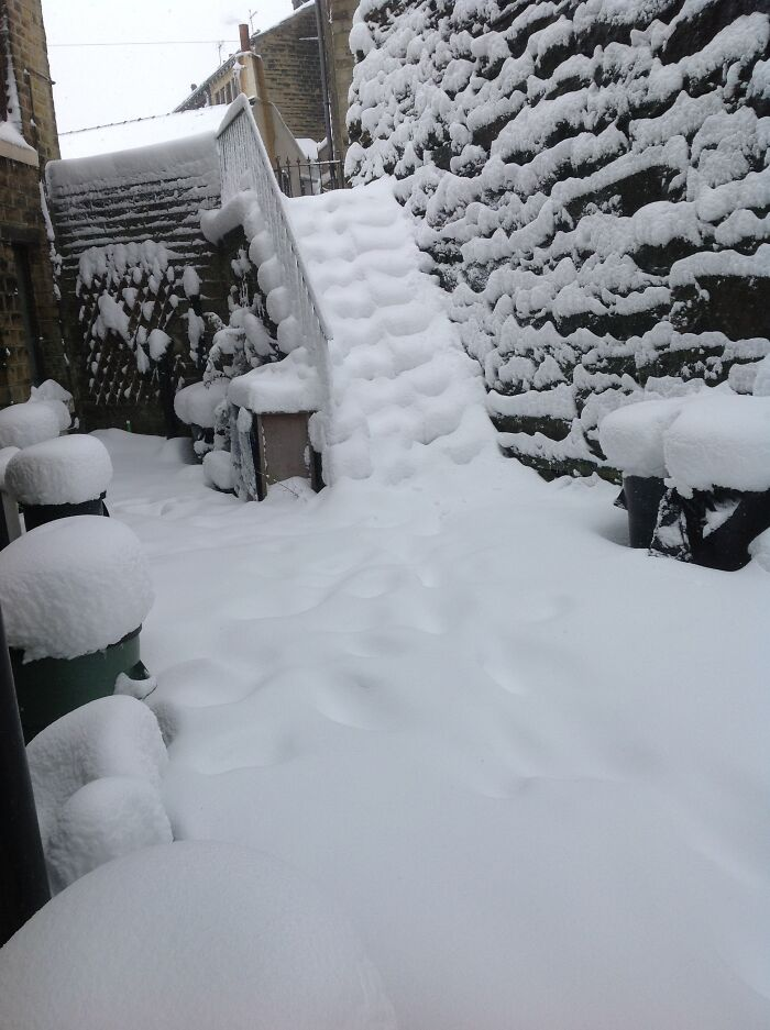 2013 - View From My Back Door. Been Hoping For The Same Amount Ever Since