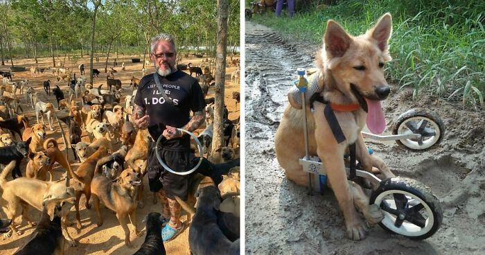 This Thai Animal Shelter Nurses Disabled Dogs Back To Life With The Help Of Vets And Wheelchairs