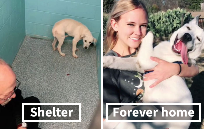 TikTok Challenge Has People Sharing Pics Of How Their Dogs Looked At The Shelter Versus How They Look Now (40 Pics)