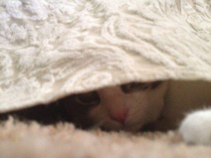 Bunny (The Cat) Thinks She Is Hiding.