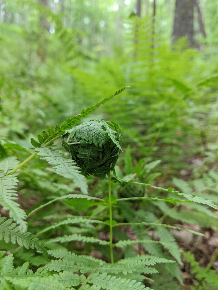 Forest Of Fern