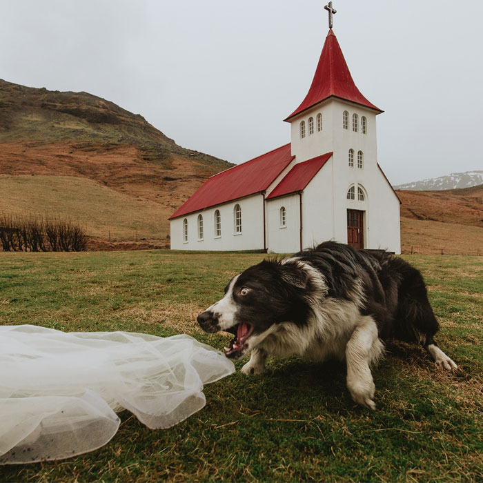 19 Adorable Dogs That Made It To The Finals On World's Best Wedding Photos