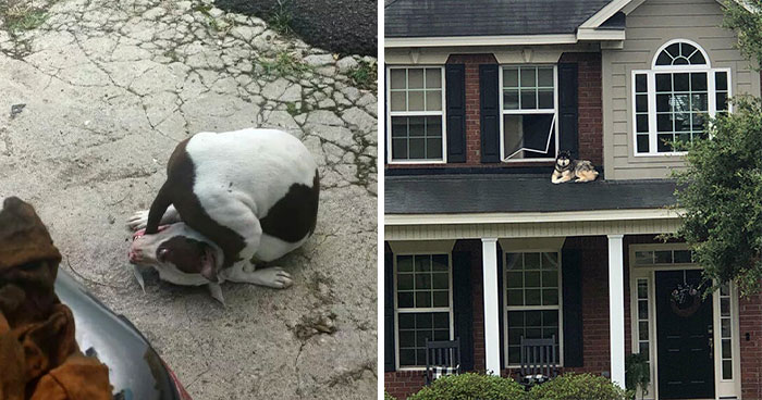 """""""What's Wrong With Your Dog?"""": People Are Posting Pictures Of 'Malfunctioning' Dogs (49 New Pics)"""