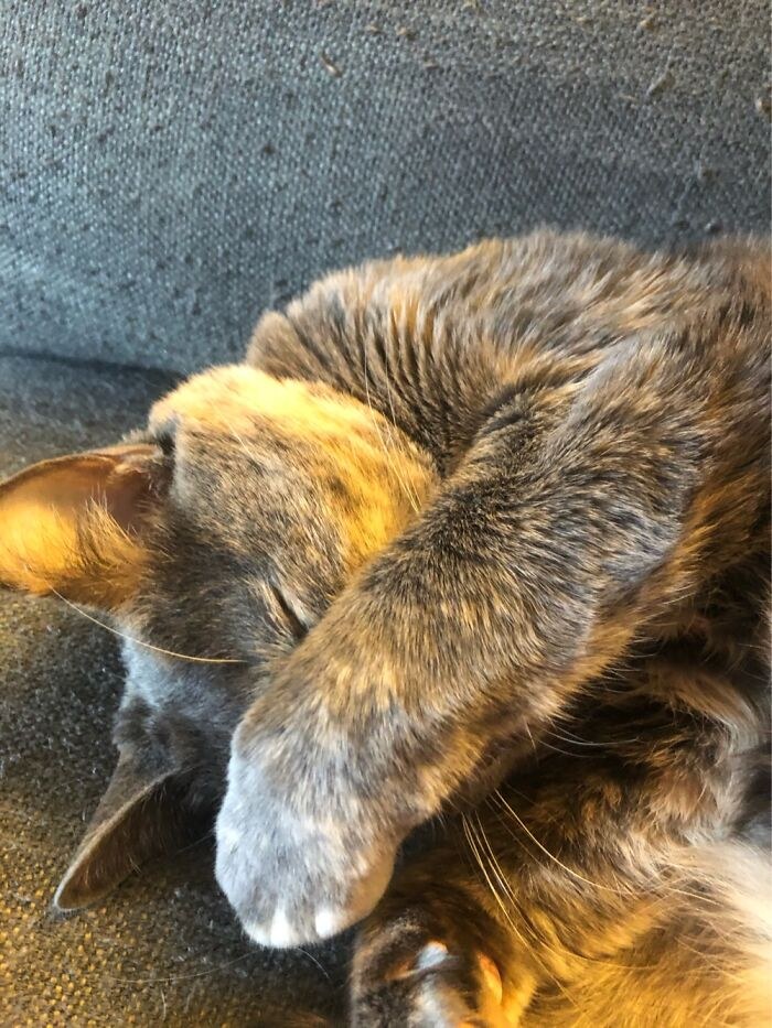 My Cat Napping While Covering Her Face