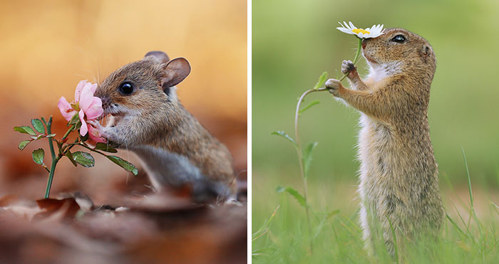 Award-Winning Photographer's Work Shows What Happens In Nature When The Animals Are Alone And At Peace (30 New Pics)