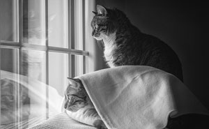 Cats Love Windows, Here Are My 60 Photos That Capture That