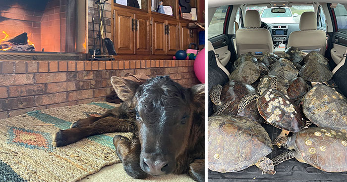 Texans Are Bringing Farm And Wild Animals Inside To Keep Them Warm During The Cold Wave (19 Pics)