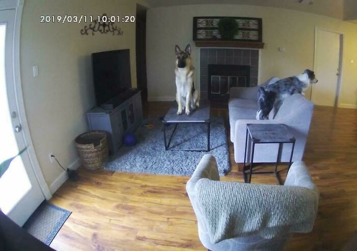 Got A Live Feed Camera So I Could See What My Dogs Are Up To While I'm At Work