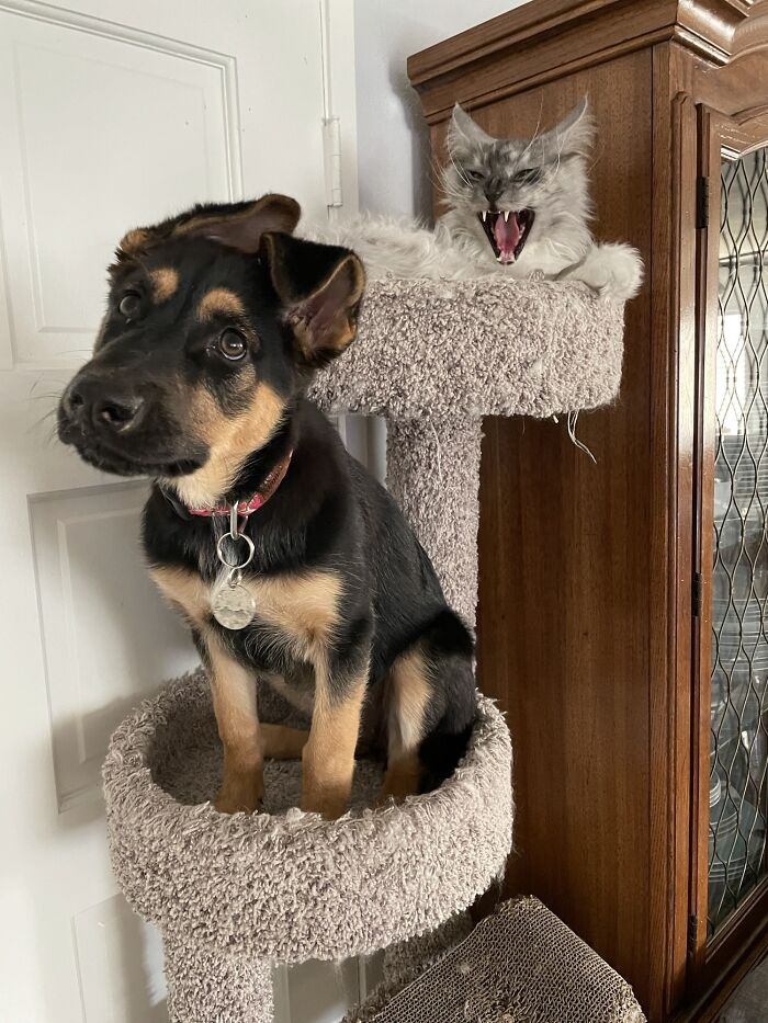 Cat Trees Aren't Meant For Dogs