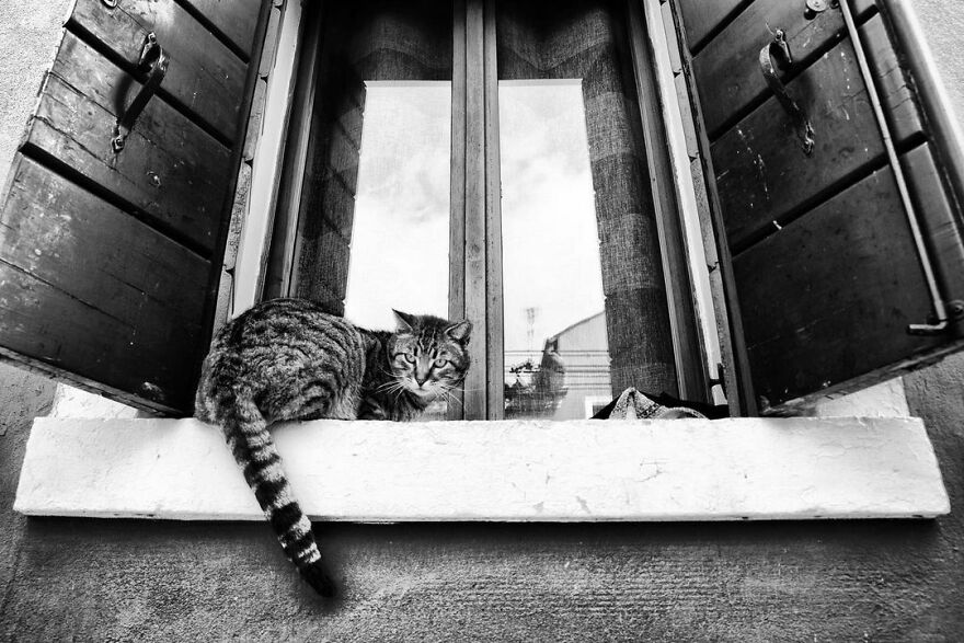 On The Window Sill, High Up There, Where She Feels Safer, Where She Can Check Her Territory, And Most Importantly Where Maybe That Kind Man Who Cares For Her Daily Will Open The Window And Will Give Her An Extra Treat