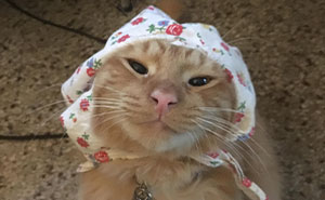 This Online Group Is All About Cat Babushkas And They Are Adorable (60 Pics)