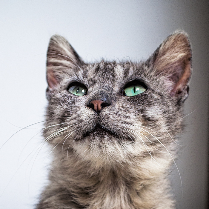 We Rescued Min-Min, Who Turned Out To Be The Most Lovely Little Girl You Could Imagine