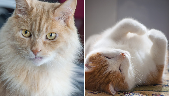 For The Past 5 Years, I've Been Taking Photographs Of Our Cats Every Single Day