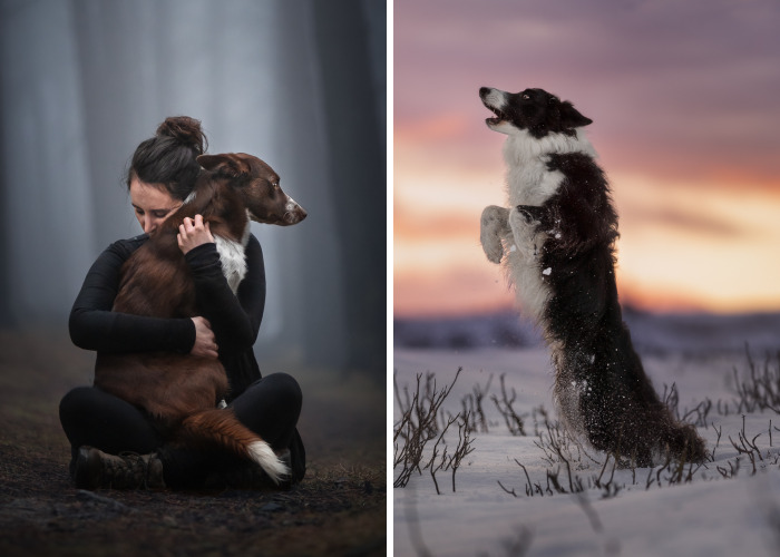 I Create Stunning Photos Of My Two Border Collies
