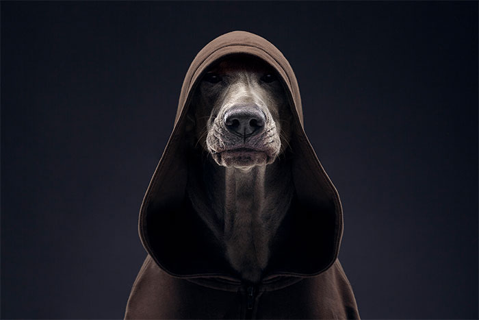 We Explore The Uniqueness Of Different Dog Breeds And Their Beautiful Personalities (30 New Pics)