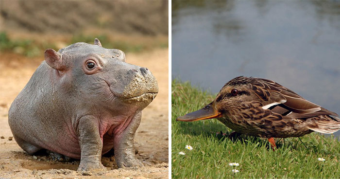 This Instagram Account Shows What Animals Would Look Like Without Necks (32 Pics)