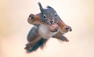 Photographing Squirrels Has Brightened My Life And I Hope These Pictures Will Brighten Yours