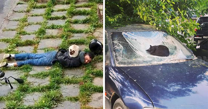 People Are Laughing At These 43 Cats Chilling In Places They Shouldn't Be, Posted By This Twitter Account