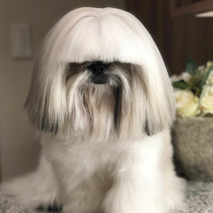 This Instagram-Famous Dog Fashionista Looks Like A Pop Star (47 Pics)