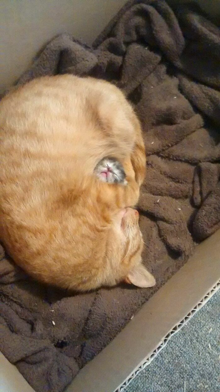 Protecting Her Only Kitten