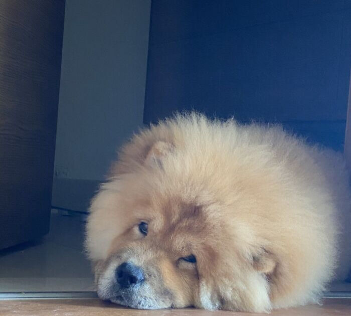 My Brothers Chow Chow