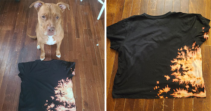 Pit Bull Accidentally Redesigns His Owner's Ordinary T-Shirt Into An Extraordinary One