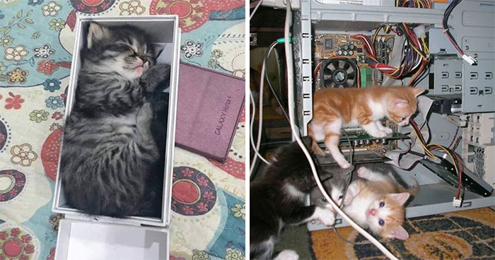 40 Pics Of Cats In Places They Shouldn't Be, But They Are Because They Can, Shared By This Twitter Account