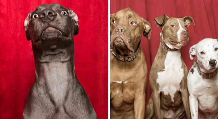 Photographer Puts Dogs In A Special Photobooth And Captures Their Reactions (30 Pics)