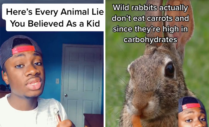 Guy Exposes 24 Animal Lies We Believe As Kids, Provides An Explanation About What Is Actually Happening