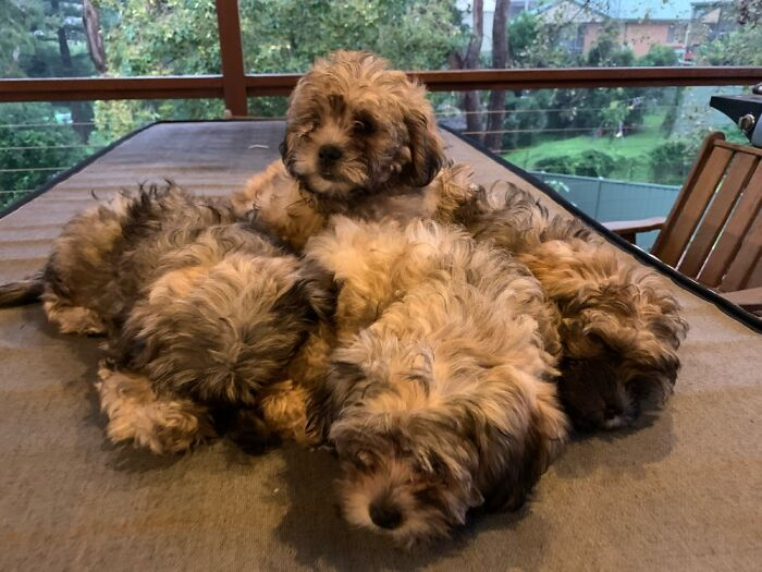 A Pile O' Puppers - There's One Or Two Underneath That You Can't See
