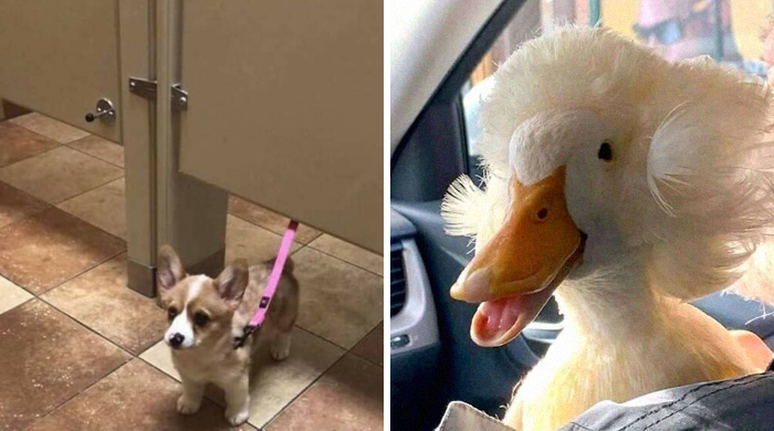 This Facebook Page Is All About Animal Images That Need To Be Seen (50 Pics)