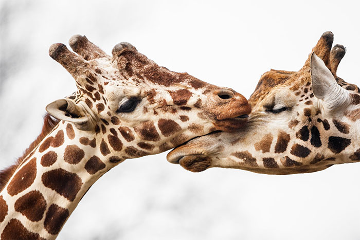 I've Been Photographing Wildlife For 15 Years, Here Are My 30 All-Time Favorite Photos
